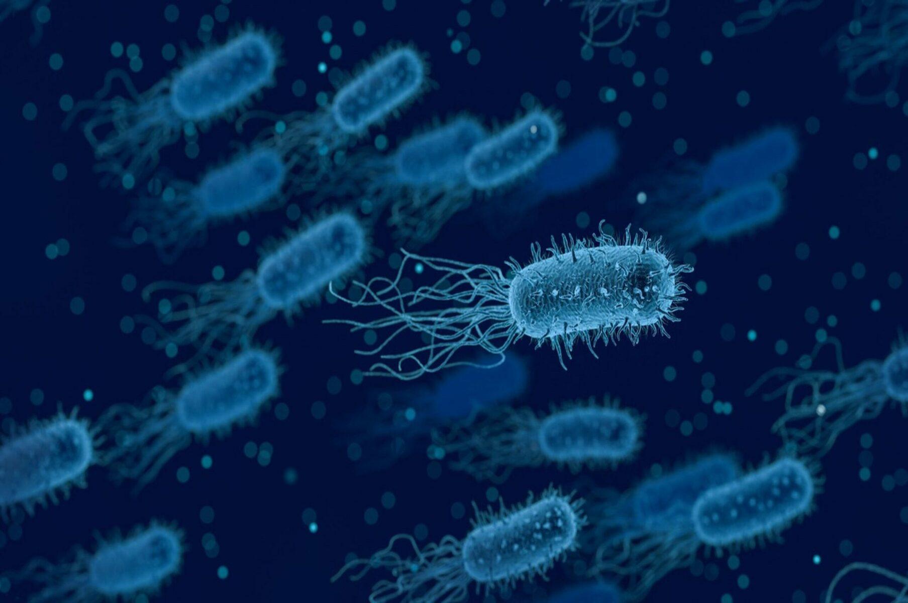 batteri e lotta alle malattie