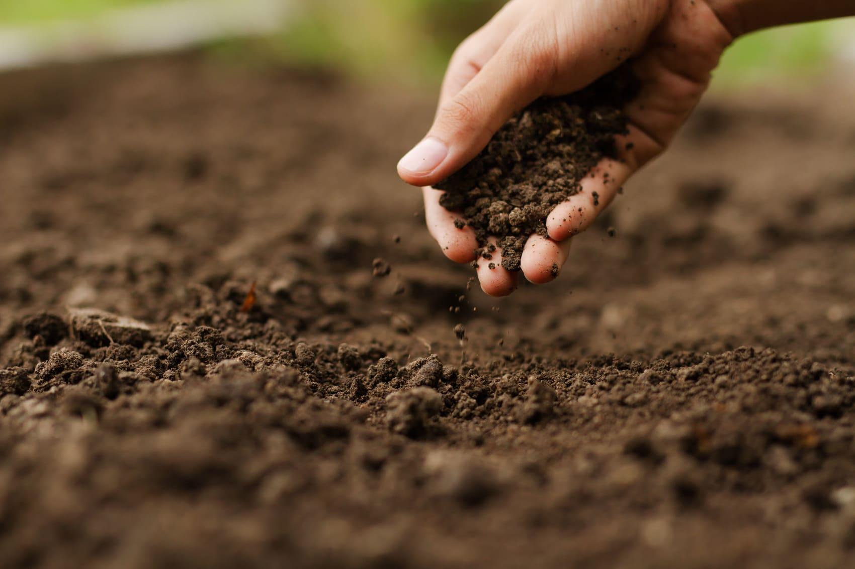 Agricoltura rigenerativa