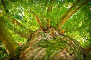 Ecosia: per fare del bene basta una ricerca