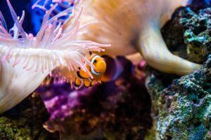 Pensare alla barriera corallina come a un'opera d'arte da restaurare
