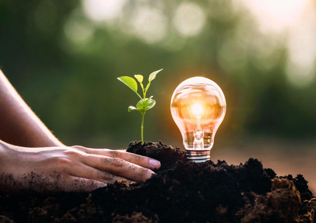 energia elettrica piante