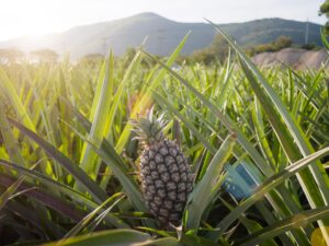 Il nuovo tessuto eco-friendly arriva dall'ananas: la storia di Piñatex